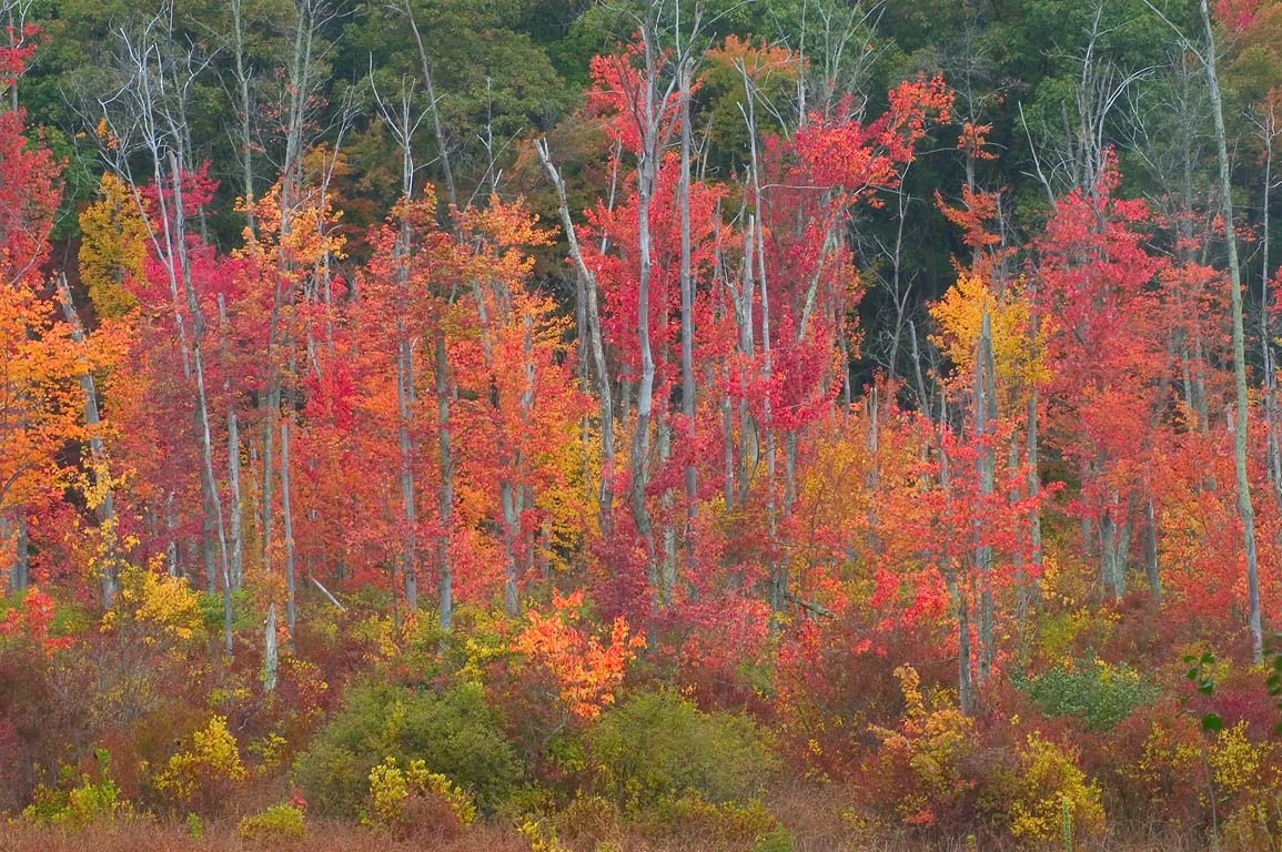 photo 41823 rolling dam and fall colors of blackstone